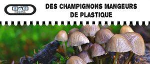 Des champignons qui mangent le plastique
