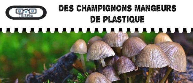 un champignon magique et responsable